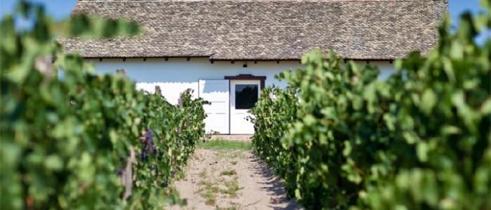 Autohtona vina Subotičko-Horgoške vinske regije